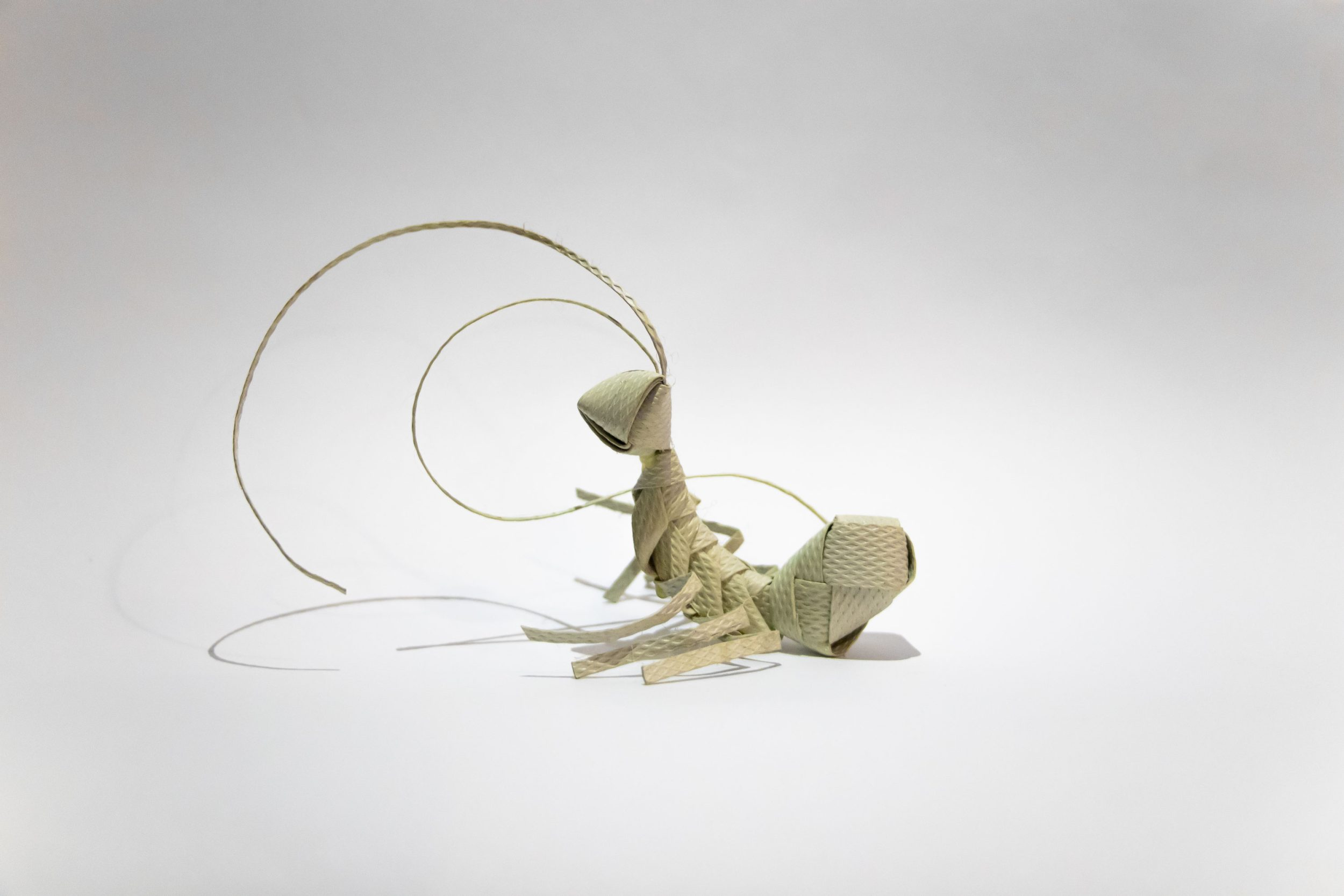 Ant-web